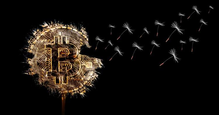 semillas BTC Bitcoin criptomonedas noticias