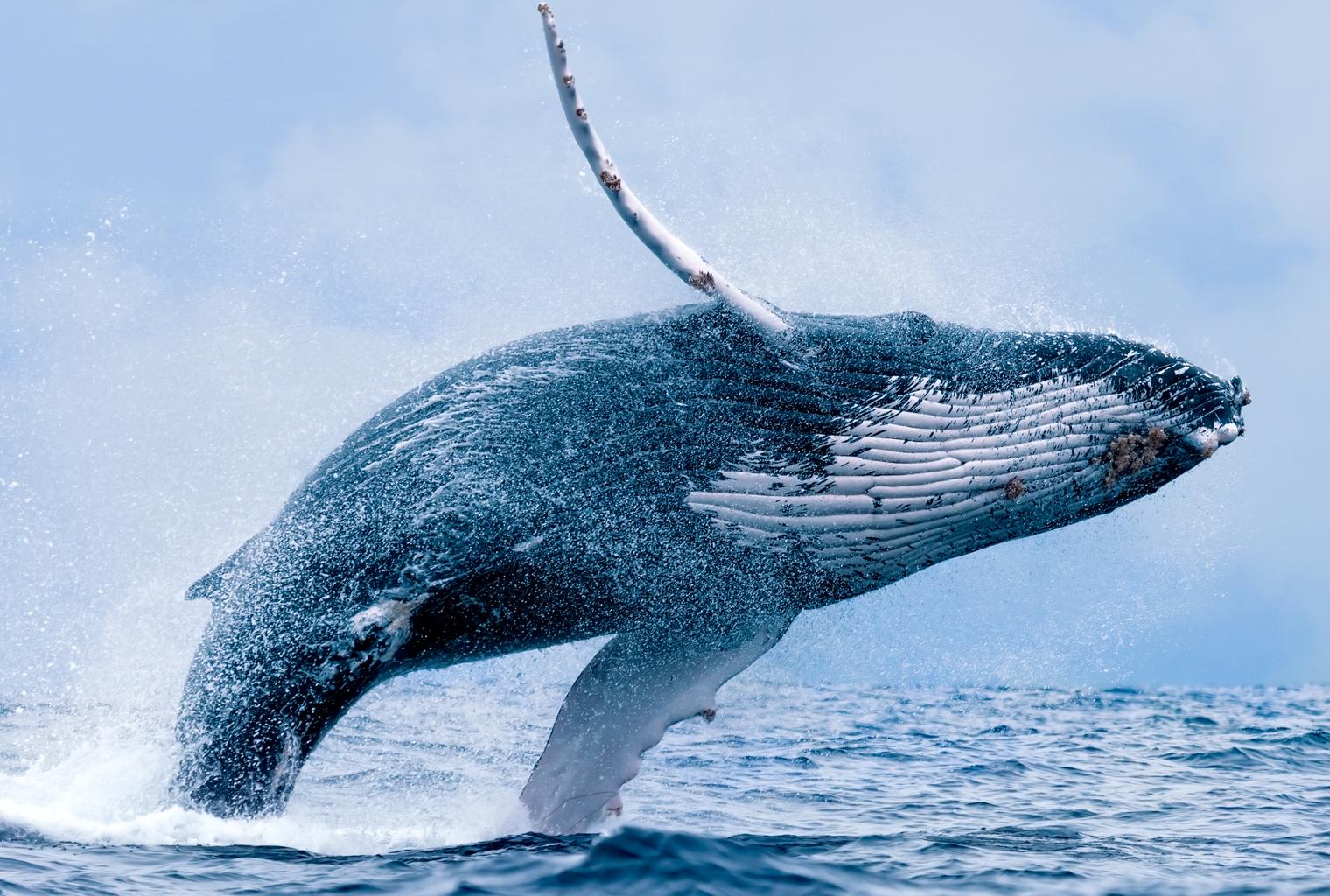 Perspectivas del mercado: Crypto Whale Tales y el Blockchain Hype de China