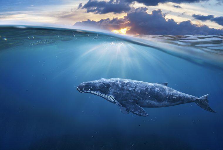 Gane o pierda, estas ballenas criptográficas comparten sus oficios
