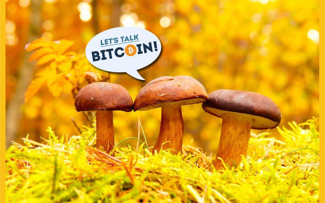 Filosofía de descentralización: ¿Crypto todavía necesita catalizadores?