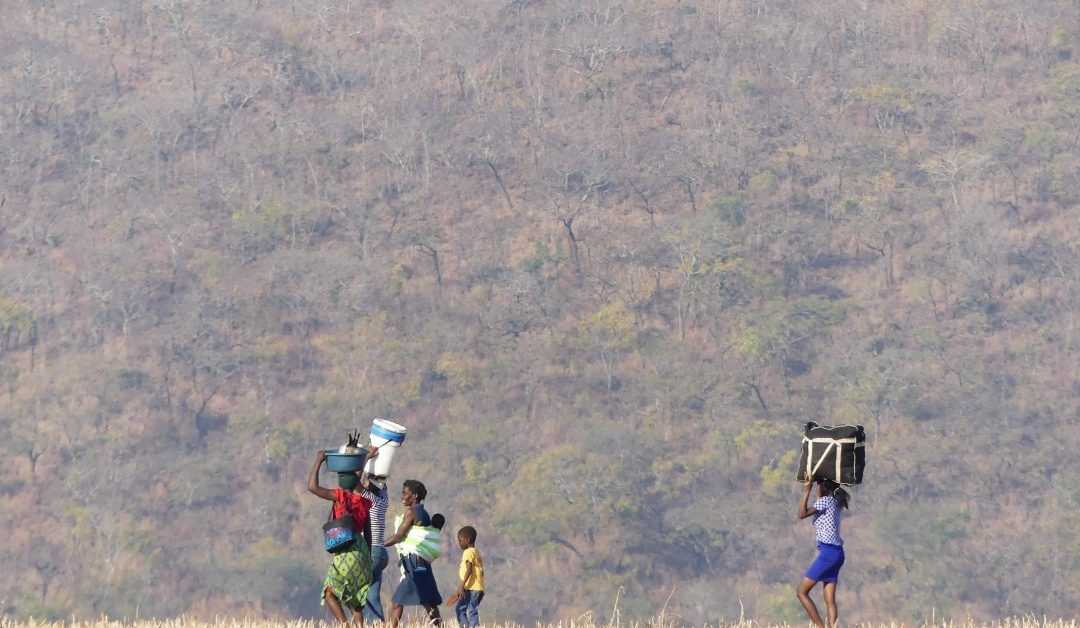 Si Bitcoin funciona en Zimbabwe, funciona en todas partes – CoinDesk