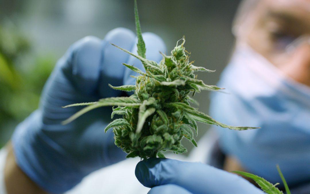 Impulsando la industria del cannabis: archivos del servicio de préstamos criptográficos de EE. UU. Para la venta de tokens regulados