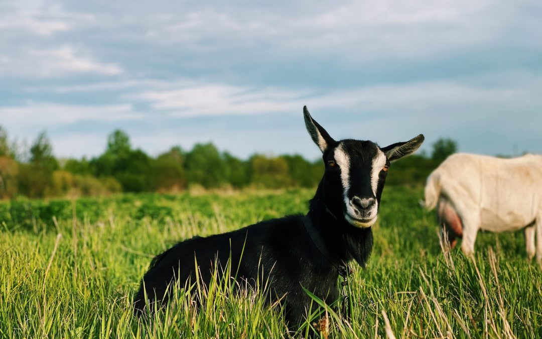 Kyber Network está llevando la producción agrícola a DEXland