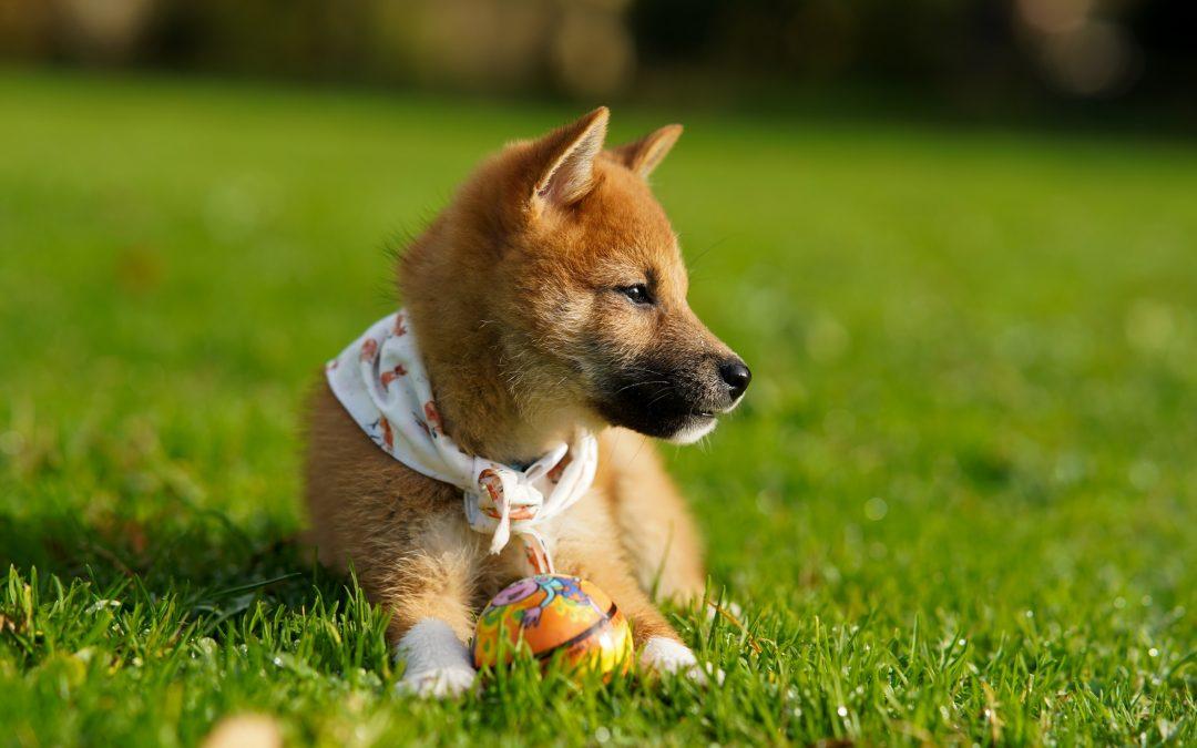 Los volúmenes de Dogecoin aumentan 1.900% en 2 días en medio de videos virales de TikTok – CoinDesk