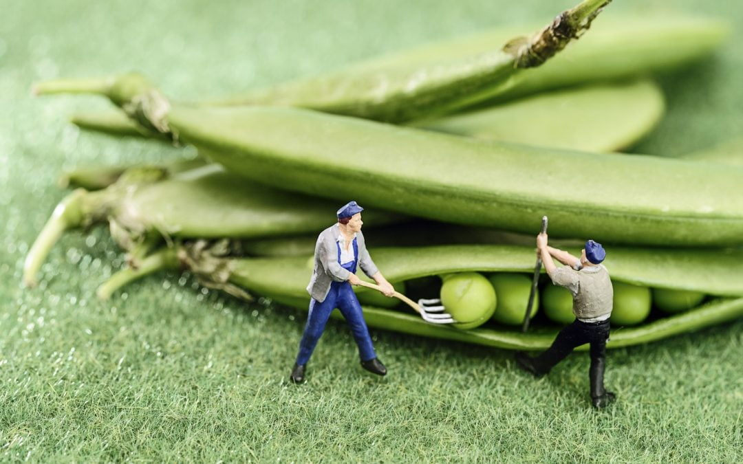 """El """"rendimiento de los agricultores"""" del compuesto convirtió brevemente BAT en la moneda más grande en DeFi"""